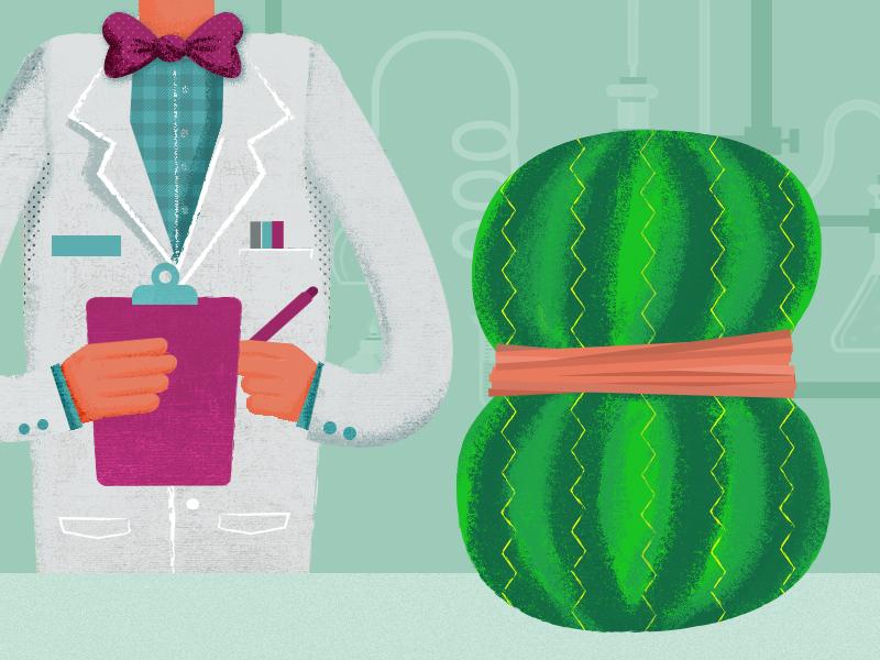 Watermelon Lab illustrator photoshop rubber bands scientist lab watermelon