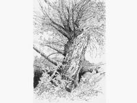 Tree No.5