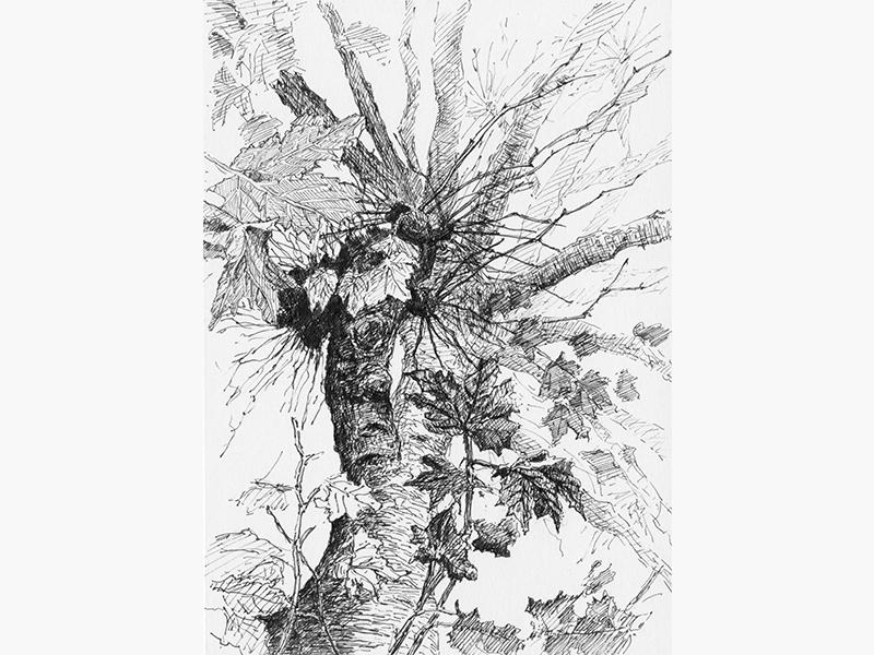 Tree No.6 nationaltreeweek art blackandwhite penandink illustration drawing sketch tree