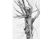 Tree No.7
