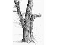 Tree No.8