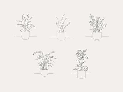 Hand-drawn Houseplant Illustrations leaves pot planting potted house plant potted plant procreate vector illustration vector art design vector plant illustration plants plant illustration