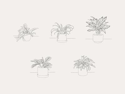 Hand-drawn Houseplant Illustrations leaves pot planting potted house plants house plant potted plant procreate vector illustration vector art design vector plant illustration plant plants illustration