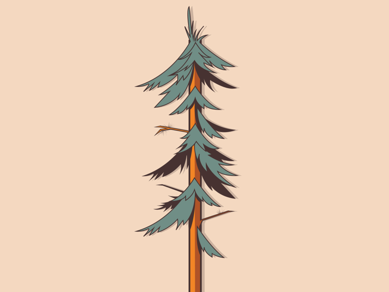 Pine tree nature illustration wilderness forest outdoors woods pine tree