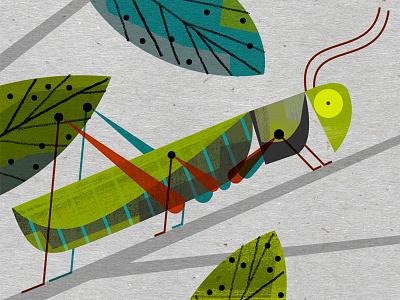 Grasshopper grasshopper
