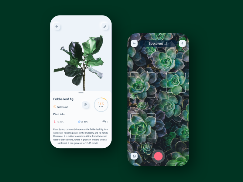 Nursery App preview rounded nature vector sketch card info green plant detection photo camera ai ui kit ios app
