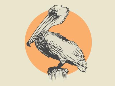 Conrad The Pelican