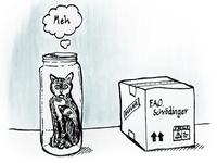 Schrödinger's Blog Post