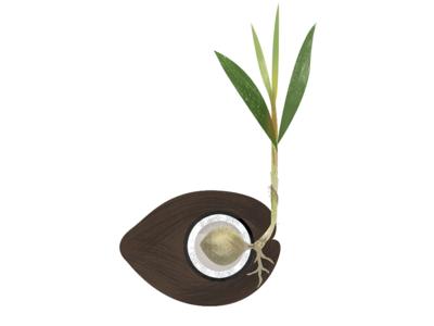 Coconut  biology plant frame animation education edtech coconut
