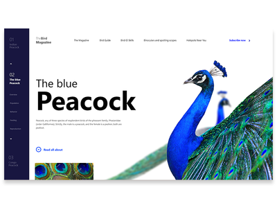 Web Ui Exercise / Peacock / Bird Magazine