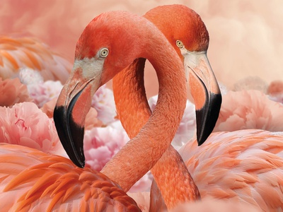 Flamingos, Poenies and Cotton Candy  Poster Artwork