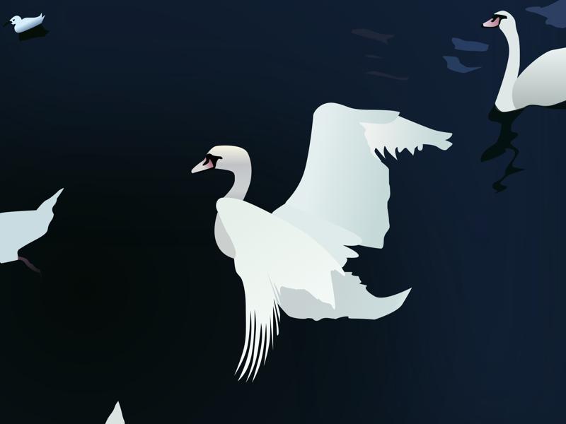 Swan Lake realism illustration wings lake swan