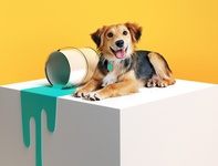 Jetty Pet pets dog brand assets brand email render cinema4d photoshop