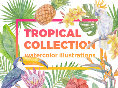 Tropical collection. Watercolor illustrations. protea jungle green pineapple cockatoo toucan flower leave bird watercolor tropical illustration