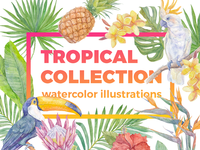 Tropical collection. Watercolor illustrations.