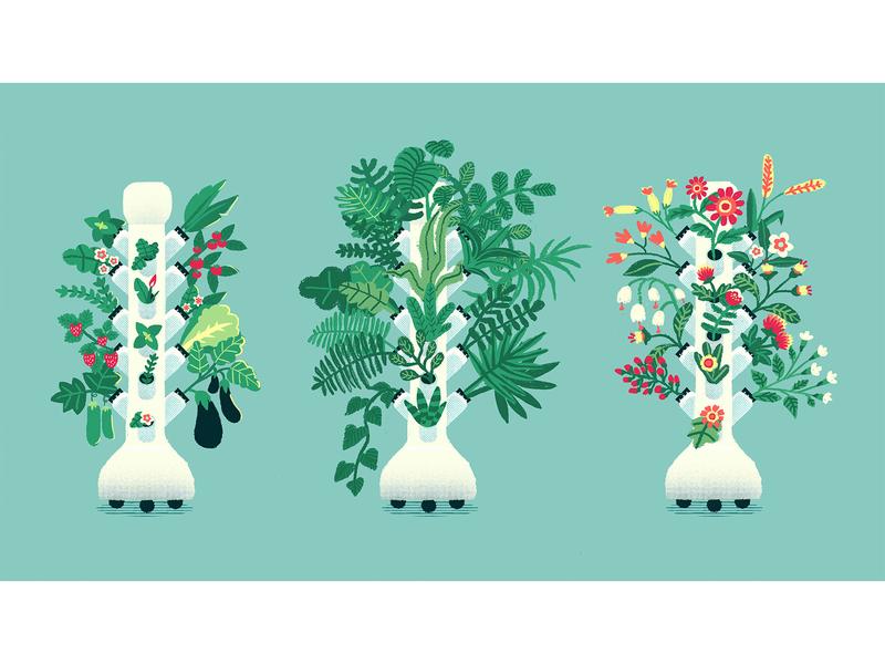 Hydroponics growing system motion design vegetables veggie hydroponics vector plants design nature leaf digital illustration illustration hili noy