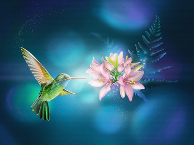 Bright Choice colibry bird flower bright choice
