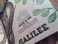 Galilee by Bone & Co.