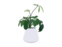 House Plants 02