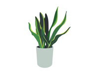 House Plants 04