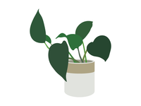 House Plants 05