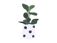 House Plants 08
