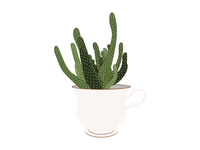 House Plants 09