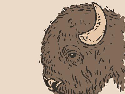 Bison procreate roam great plains north america animals design drawing hand drawn little mountain print shoppe illustration joe horacek buffalo bison