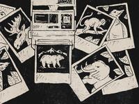 Polaroid Wildlife