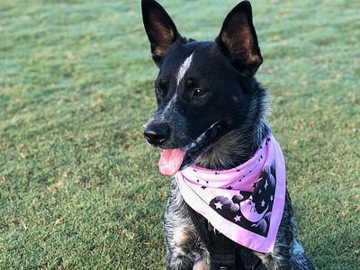 Epoch bandana in the wild dog bandana