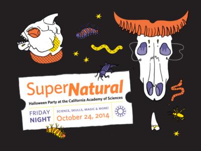 Halloween Brochure insects skulls vector animals illustration