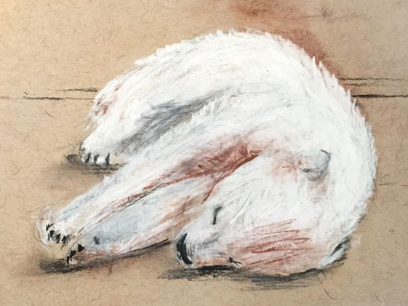 Polar Bear Sketch childrens book sleeping polar bear bear charcoal illustration