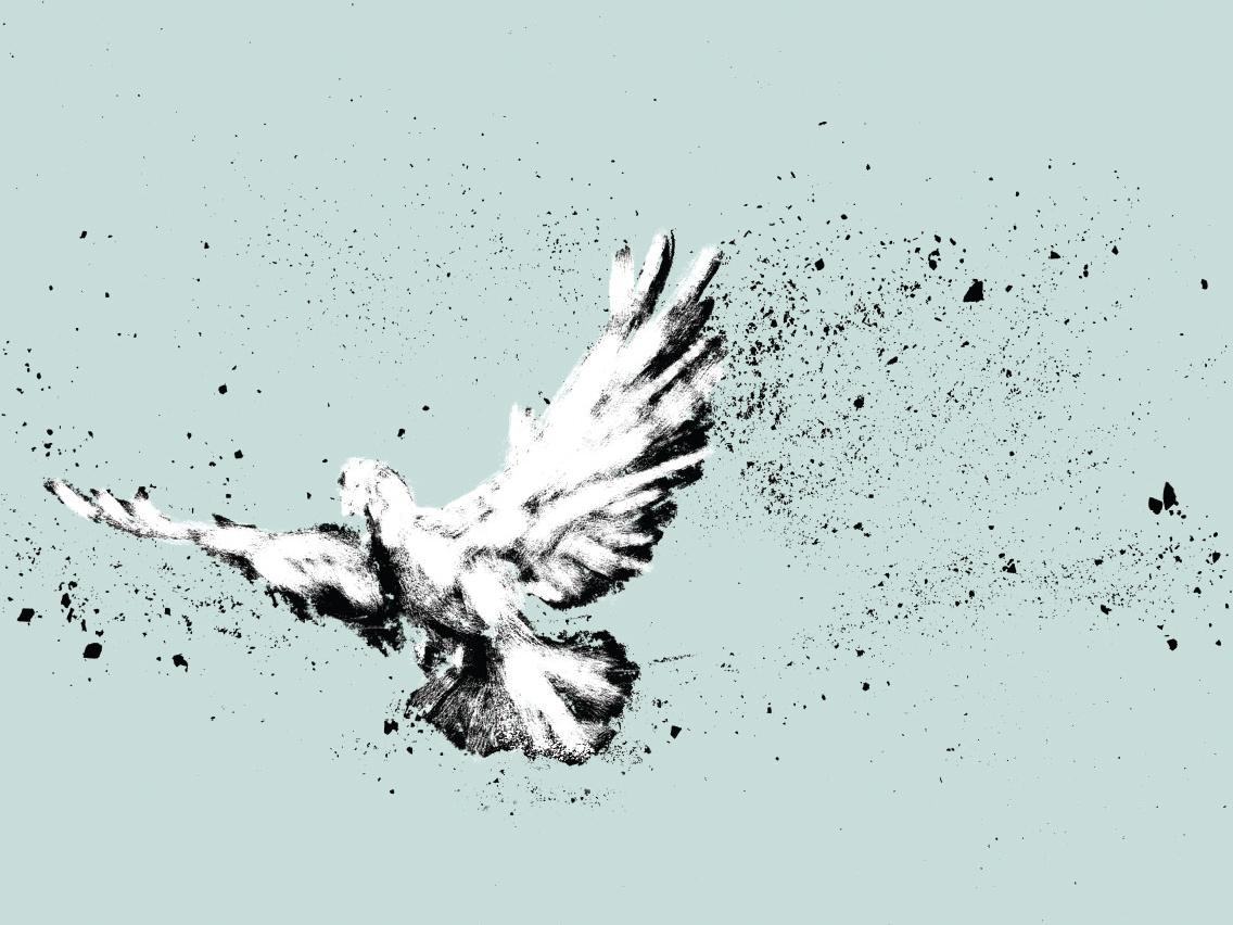 Holy Spirit Series dove bird charcoal illustration