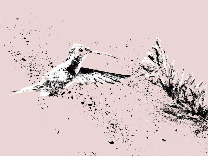 Hummingbird illustration flight flower humming bird hummingbird bird charcoal