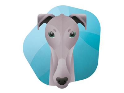 English Greyhound