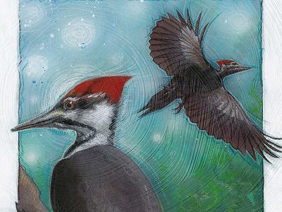 Woodpecker bird sketch illustration woodpecker