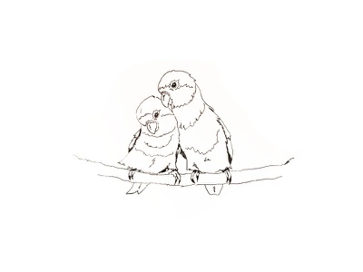 Inktober Day 29 - United birds lovebirds sketch ink pen illustration drawing inktober 2017