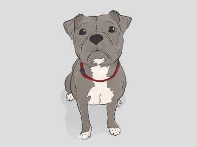 Mila the Pup! vector illustration illustrator animals animal cute puppy pitbull pets pet doggo doggy dogs dog