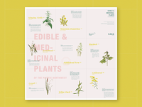 Edible and Medicinal Plants Pamphlet – Foldout