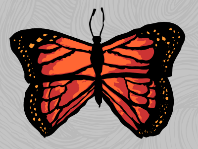 Butterfly butterfly sketch photoshop vector