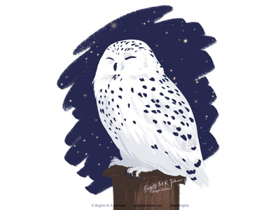 Snowy owl follower suggested image birds of prey owl snowy owl bird animal digital art digital illustration limited colours limited colour palette art illustration
