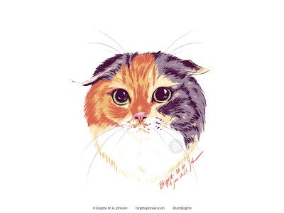 Portrait of Purin the Scottish fold portrait cute cat pet pet portrait cat cute animal limited colours limited colour palette digital art digital illustration art illustration