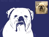 Gladys, the english bulldog