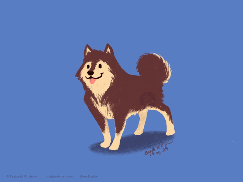 Finnish Lapphund doggust2019 doggust dog illustration dog animal limited colours limited colour palette art illustration digital art digital illustration