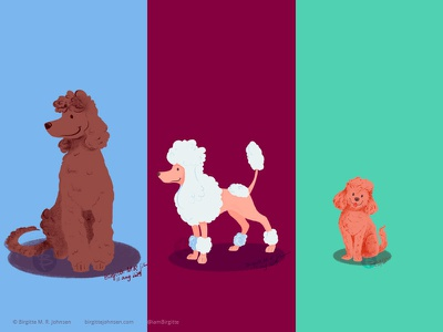 Poodles doggust2019 doggust poodle dog illustration dogs dog animal limited colours limited colour palette art illustration digital art digital illustration