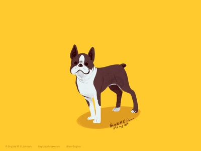 Boston Terrier doggust2019 dog illustration doggust dog animal limited colours limited colour palette art illustration digital art digital illustration