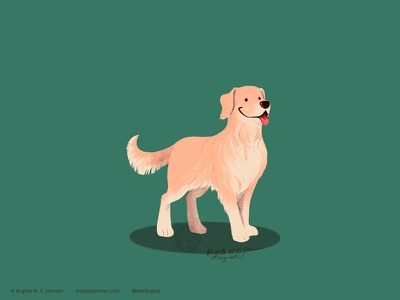 Golden Retriever dog illustration doggust2019 dog animal limited colours limited colour palette art illustration digital art digital illustration