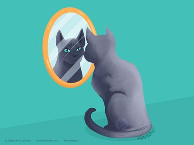 Korat staring in the mirror