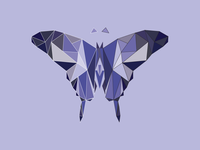 Polygon Butterfly
