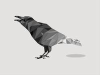 Polygon Crow